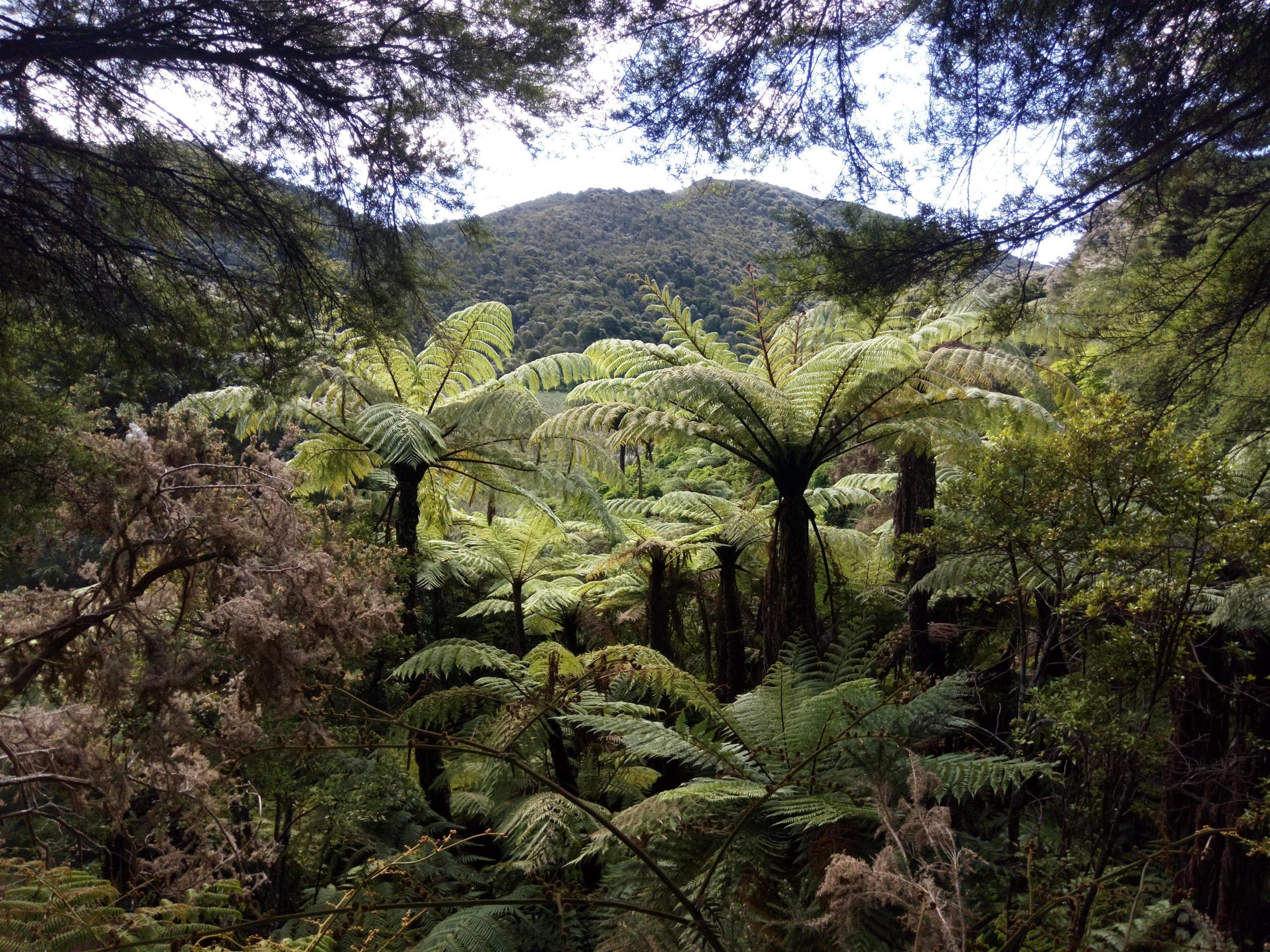 Bosque en Abel Tasman Coast Track