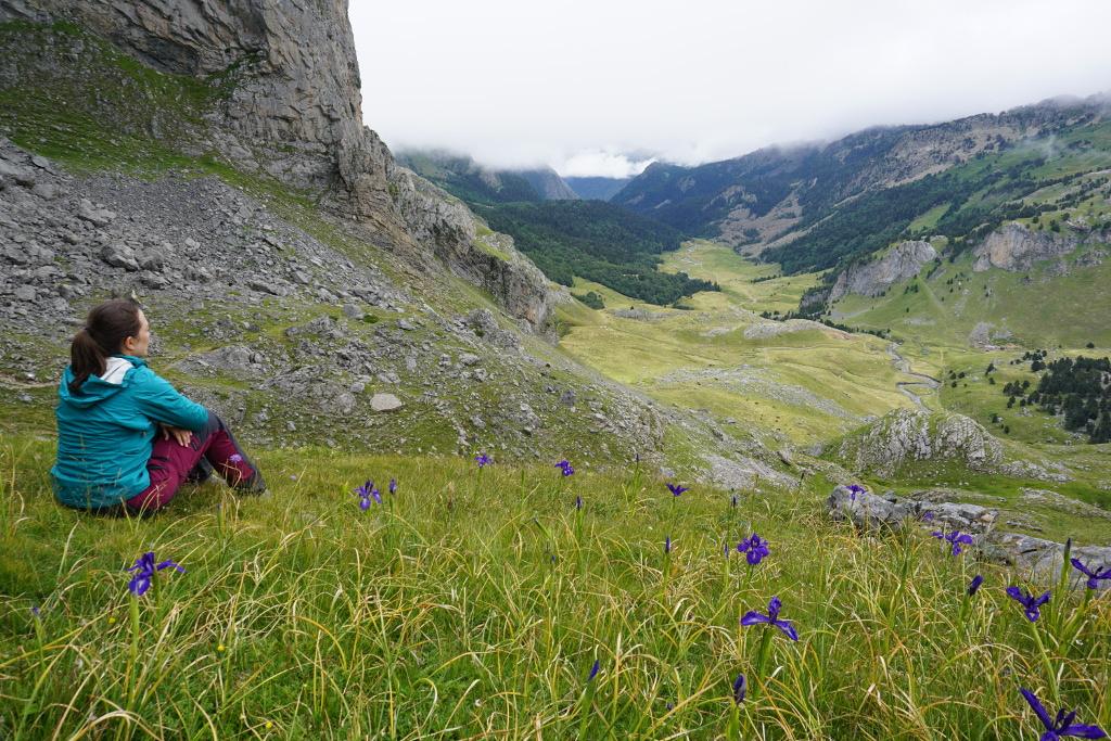 Lirios del Pirineo en Lacs de Ayous