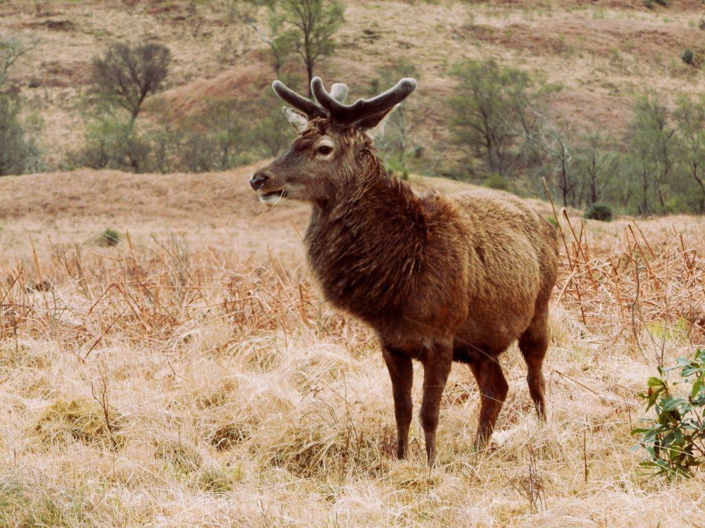Escocia Glen Etive