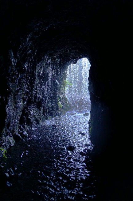 Pingandito en el túnel nº 12 en el PR LP 06. Los Sauces – Los Tilos. Isla de La Palma.