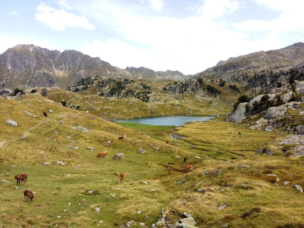 Pirineos, vaquitas en los Lagos de Colomers