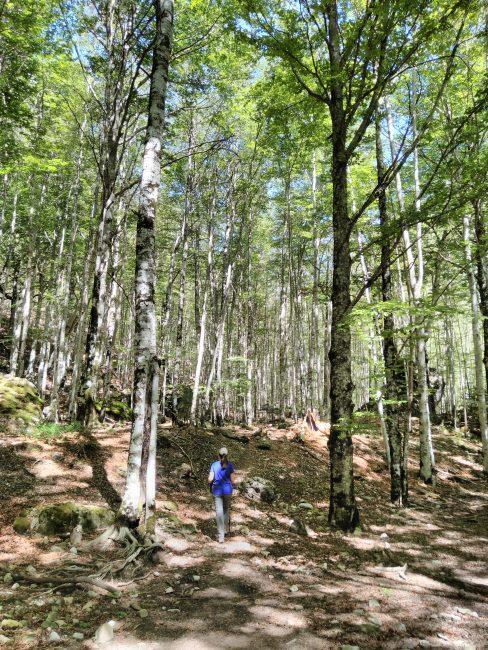 Pirineos, hayedos en el interior del Cañón de Añisclo