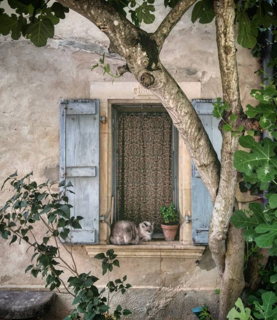 Gatito en el alféizar de una ventana de Bruniquel