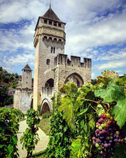 Malbec, una variedad de uva morada usada para hacer vino tinto, en Cahors.
