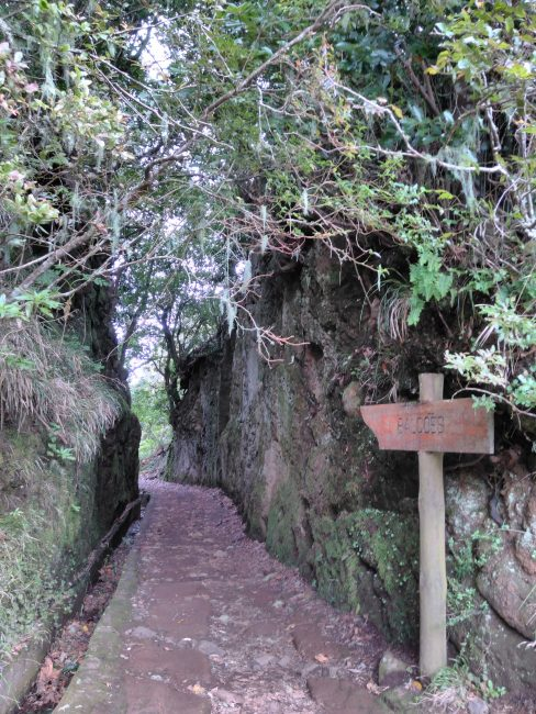 Vereda dos balcões, Madeira