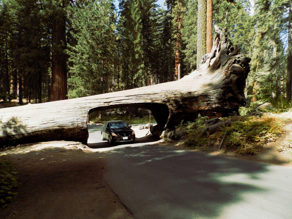 EEUU Oeste Coche en Sequoia