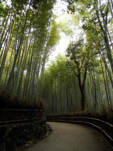 Japón Bosque de bambú de Arashiyama en Kyoto