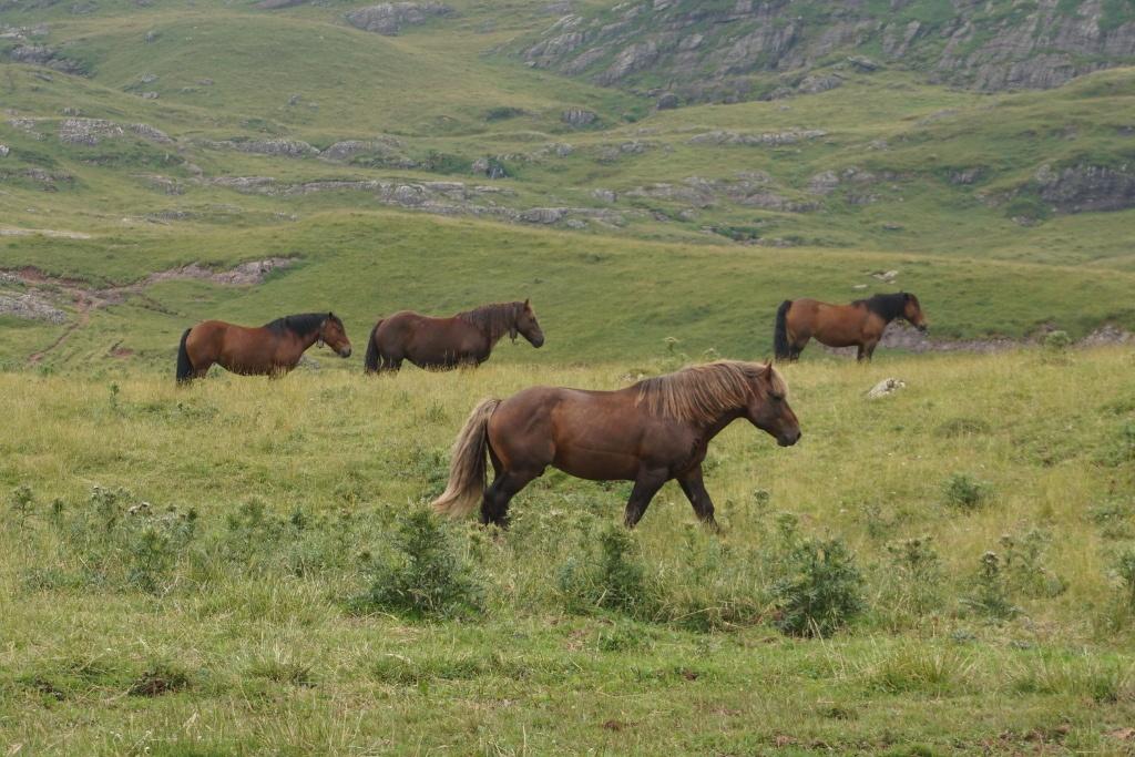 Manadas de caballos en el Valle de Aguas Tuertas