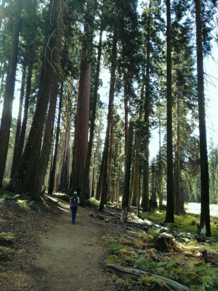 EEUU Oeste Sequoia National Park