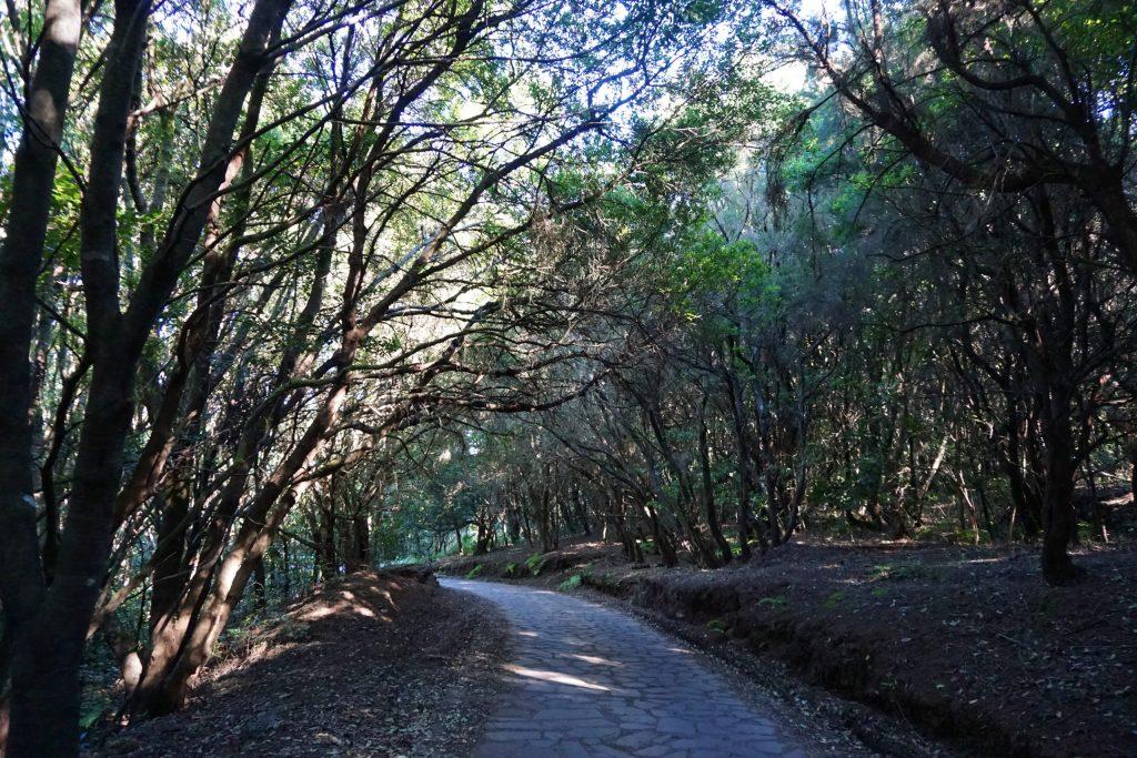 Camino a El Cedro, Gran Circular de Garajonay