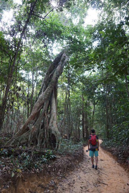 Atravesando la selva camino a Lazy Beach, Koh Rong Samloem, Camboya
