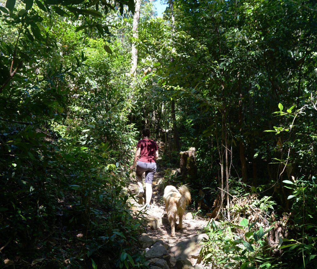 """Paseando por la selva con nuestro guía """"Mad Dog"""""""