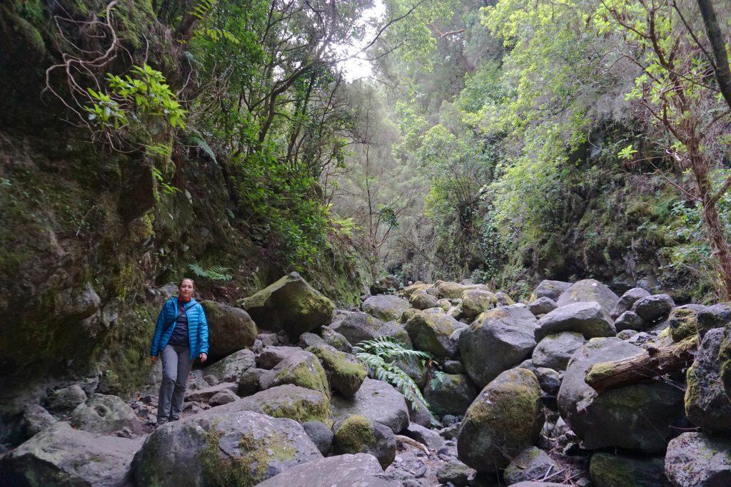 Atravesando el barranco Rivero del PR LP 06. Marcos y Cordero – Los Tilos, La Palma.
