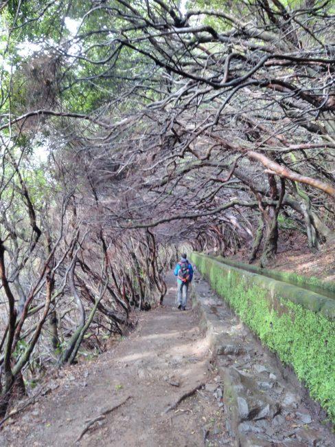 Levada das 25 Fontes, Madeira