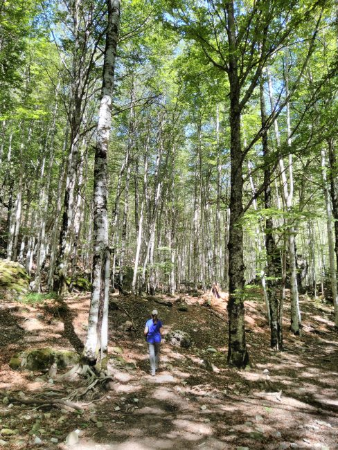 Parque Nacional de Ordesa y Monte Perdido, hayedos en el interior del Cañón de Añisclo