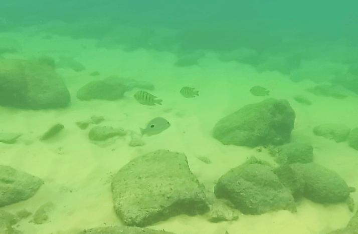 Pececillos en Lazy Beach