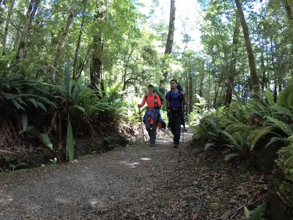 Bosque de hayas y helechos en Kepler Track
